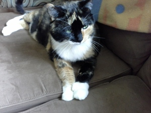 Patchy with her mitten paws